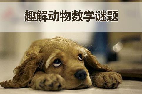 【1月22日19:30 - 20:30】趣解动物数学谜题
